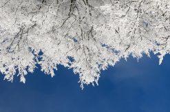 6 produits naturels pour l'hiver