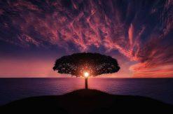 luminotherapie et naturopathie même combat ?